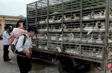 Plusieurs localités renforcent la prévention des grippes aviaires