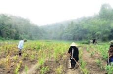 La santé pousse sur le mont Yên Tu au Nord-Est