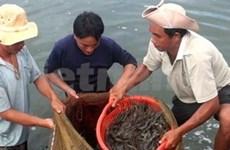 Bond de 38% des exportations de crevettes en août