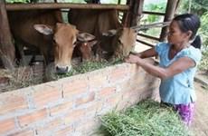 Aide du FIDA pour Ha Tinh et Quang Binh