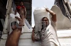 Les Philippines importeraient de riz du Vietnam ou de Thaïlande