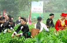Diverses activités au Festival du thé de Thai Nguyen