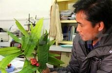 Lâm Dông : découverte d'une population de Camélia Krempf considérée comme éteint