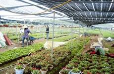 Balade dans les villages floricoles de Hanoi