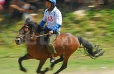 Hô Chi Minh-Ville : les chevaux de course et leurs admirateurs