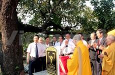 Phu Yen, vingt manguiers classés patrimoine national