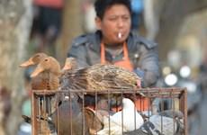 Hanoi active dans la prévention et la lutte contre la grippe aviaire