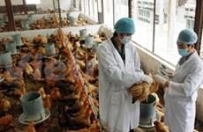Multiplication des mesures contre la grippe aviaire