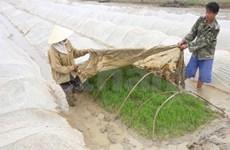 La production agricole entravée par le froid