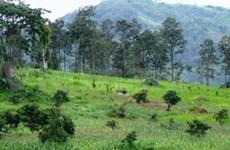 Des ONG s'efforcent de développer durablement les forêts