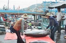 Le TPP profitera aux exportations de produits aquatiques au Japon