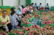 Chine, premier importateur de fruits et légumes vietnamiens en janvier et février