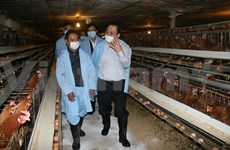 Grippe aviaire: le vice-PM Hoang Trung Hai inspecte Lang Son