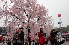 Ouverture de la Fête de la cerise de Ha Long 2014