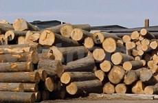 Le Gabon, un nouveau débouché prometteur pour les produits vietnamiens