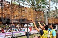 Riches activités au Festival de Hue 2014