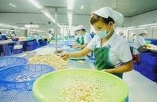 Vietnam: belles opportunités pour l'export de la noix de cajou