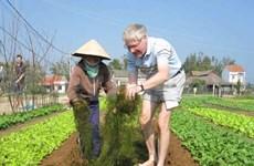 Les touristes se mettent dans la peau d'un paysan vietnamien à Hoi An