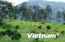 Sylviculture : un projet financé par la BAD au Tay Nguyen