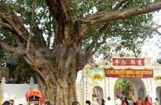Un nouvel arbre du patrimoine à Phu Yen