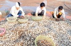 L'UE refuse certains mollusques bivales vietnamiens