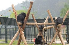 Le Centre de sauvetage des ours de Tam Dao