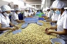 Noix de cajou : Dong Nai exporte 3.000 tonnes en janvier