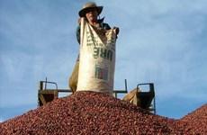 Vers un développement durable du café vietnamien