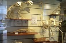 Le Musée de la nature, une ode à la biodiversité