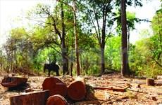 Au secours des éléphants de Dak Lak