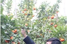 Bac Giang renforce son programme de développement agricole