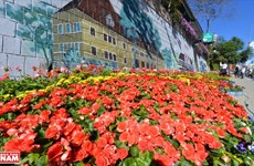 Da Lat, capitale nationale de la floriculture