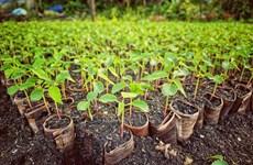Visiter un jardin fruitier à Phong Dien, Can Tho