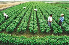 Agriculture: Relier les paysans aux entreprises pour réussir l'intégration