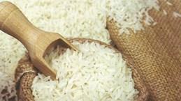 Chine, premier importateur de riz parfumé du Vietnam