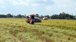 Le PM accepte la conversion des terres agricoles à Vinh Long et Kien Giang