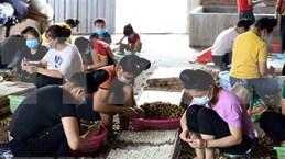 ASEAN : promotion du rôle des femmes dans l'agriculture