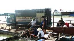 L'élevage d'Hemibagrus guttatus en vogue à Phu Tho