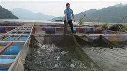 La pisciculture semi-sauvage dans le réservoir de Hoa Binh