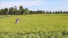 L'IFAD aide Tra Vinh à s'adapter aux changements climatiques