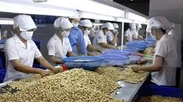 Les Pays-Bas vont investir dans la filière de la noix de cajou à Binh Phuoc