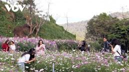 L'agrotourisme à Lâm Dông