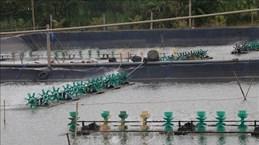 Construire une zone d'aquaculture pour l'exportation en aval de la rivière Tien