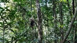 Trois animaux sauvages relâchés dans le Parc national de Bu Gia Map