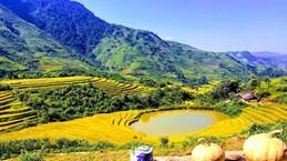 """Sin Suối Hồ, un """"printemps doré"""" à Lai Chau"""
