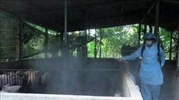 Des foyers épidémiques de peste porcine africaine découvertes à Hung Yen et Thai Binh