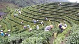 Le festival de Thai Nguyen rend hommage à la filière du thé