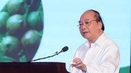 Le PM exige plus d'efforts pour assurer une culture efficace de la macadamia