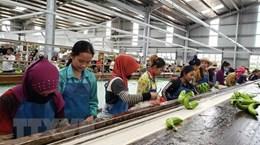 De projets agricoles vietnamiens qui créent des emplois stables au Cambodge