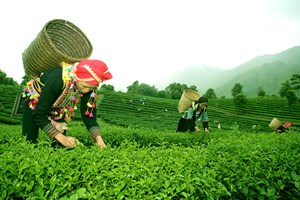 La province de Lai Chau renforce l'exploitation du tourisme